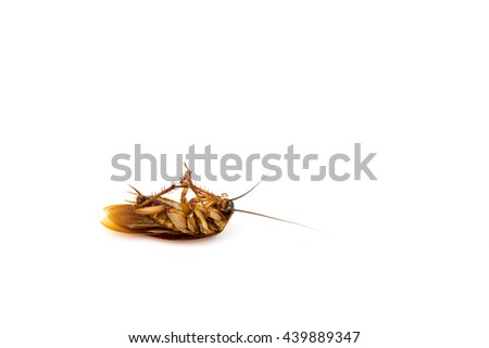 Dead cockroach on white background. - stock photo