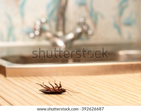 Dead cockroaches in an apartment house on the background of the water faucet. Inside high-rise buildings. Fight with cockroaches in the apartment. Extermination. - stock photo