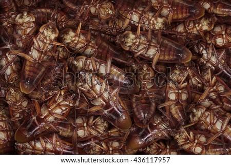 Dead cockroaches nest ,Cockroaches die as a dense nest .                 - stock photo