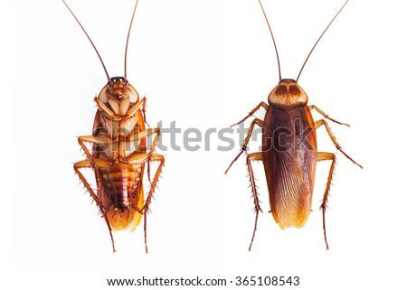 Dead cockroaches on white background  - stock photo