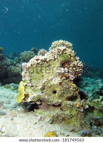 Dead coral - stock photo