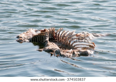 Dead deer lying in a pond in the winter thaw. - stock photo