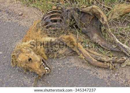 Dead dog lying on macadamized road - The dog hit by a car  - stock photo