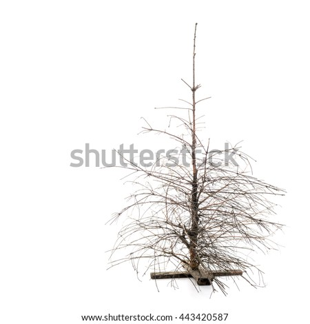 Dead Dry Christmas Pine Tree  with broken branches over white background - stock photo