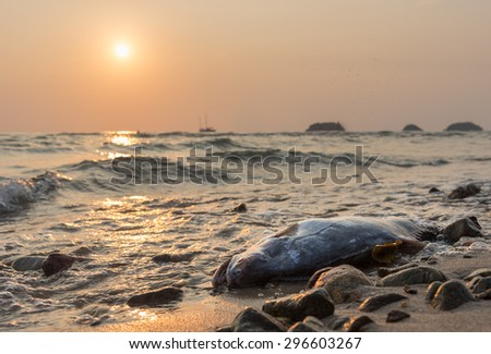 dead fish against sunset at the coast of Koh Chang island, Thailand - stock photo