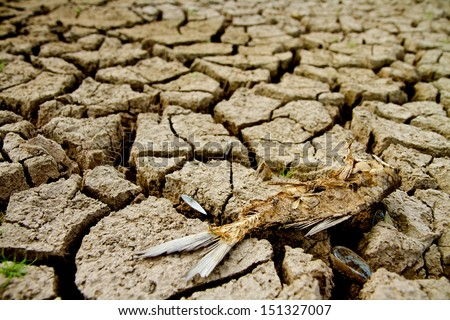 Dead fish on drought land  - stock photo