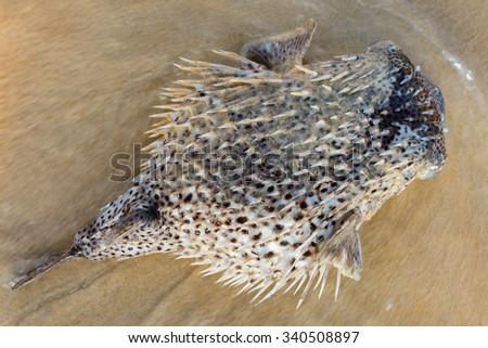 Dead fish on sand - stock photo
