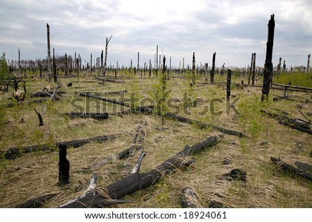 dead forest, after fire - stock photo