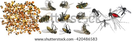 Dead insects (fly, ants and mosquitoes). Macro. Isolated on a white background - stock photo