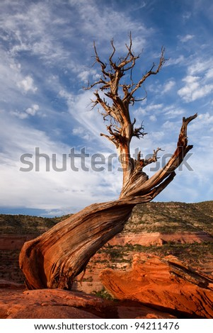 Dead Juniper tree, Colorado National Monument, Colorado - stock photo