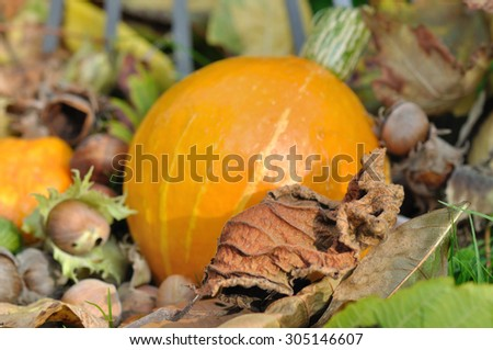 dead leaves, colorful squash, chestnuts on the ground - stock photo