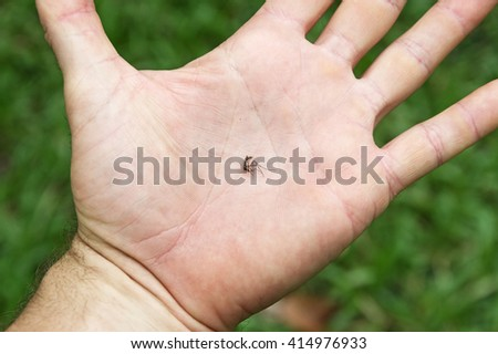 dead mosquito in the palm of a hand - stock photo