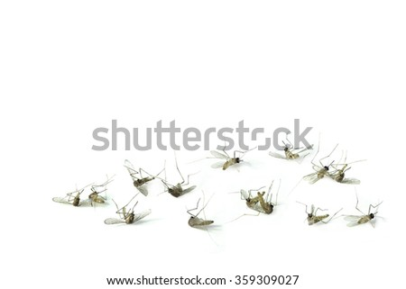 Dead mosquitoes on white background - stock photo