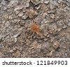 Dead plant on dry soil - stock photo
