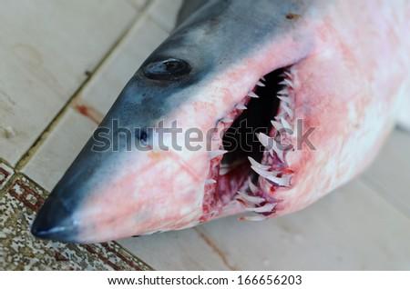 Dead shark head on the fish market, Close up shot  - stock photo