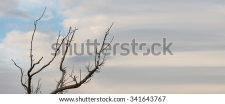 Dead Tree against sky - stock photo