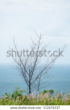 Dead Tree and sea scape - stock photo