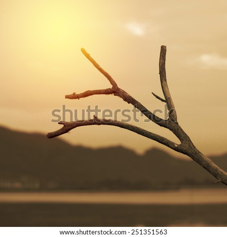 Dead tree branch with mountain background. Vintage filter. - stock photo