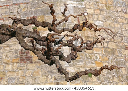 Dead Tree Branches in Front of Stone Wall - stock photo
