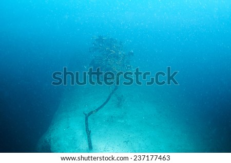 Dead tree branches under the hot spring Lake,Barracuda Lake , Coron, Philippines - stock photo