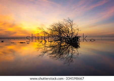 Dead tree by the sea with the beautiful morning sun. - stock photo