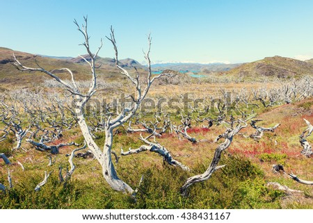 Dead tree forest near the horns horns of Towers of the Paine, Patagonia, Chile. At its base blue lake Nordenskjold. - stock photo