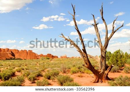 Dead tree in desert landscape, shot in the Arches National Park near Moab, Utah, USA. - stock photo