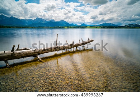 Dead tree in the lake - stock photo
