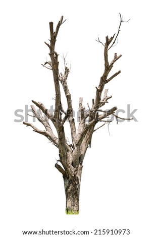 Dead tree isolated on white background - stock photo