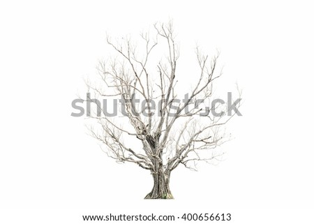Dead tree isolated on white background  Dead tree isolated on white background  - stock photo