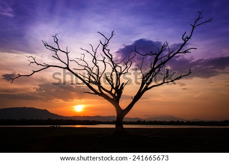 Dead tree it's alone at sunset - stock photo