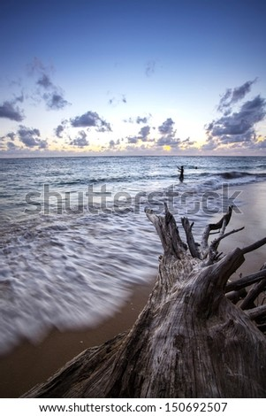 Dead tree on the beach , Long exposure - stock photo