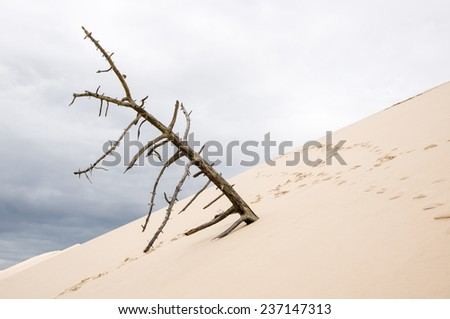 Dead tree on the Pilat Dune, the highest sand dune in Europe, in Pyla Sur Mer, France. - stock photo