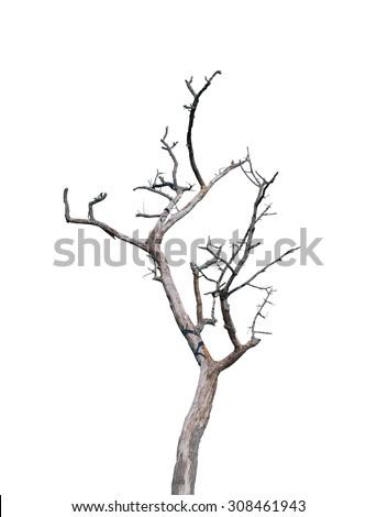 Dead tree on white background - stock photo