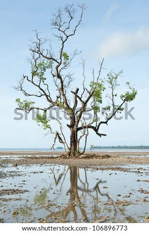 Dead Tree Still Standing on the Beach - stock photo