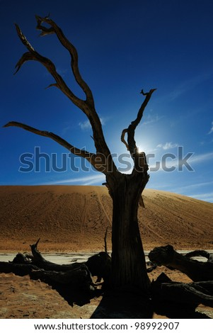 Dead tree with back-light in Sossuvlei. - stock photo