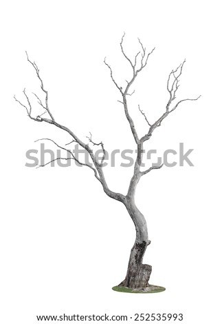 dead tree with trace of fire isolated on white background - stock photo