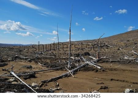 Dead trees - stock photo