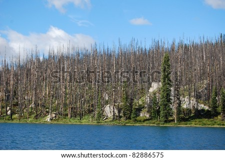 Dead trees destroyed by forest fire, Canada - stock photo