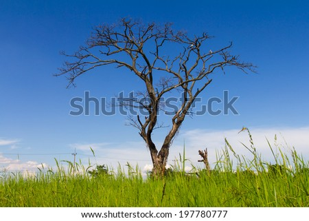 Dead trees dry naturally in the field, with the sky as a backdrop. - stock photo