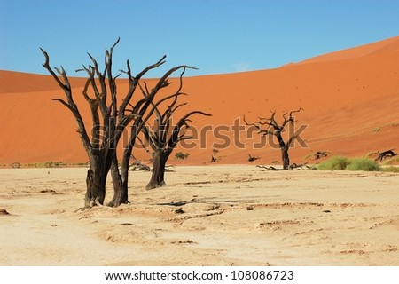 Dead trees in Dead Vlei, Namibia - stock photo