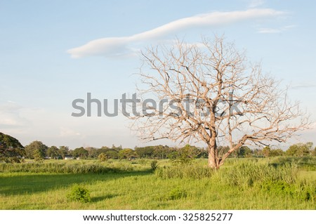 Dead trees on the green grass , blue sky .1 tree - stock photo