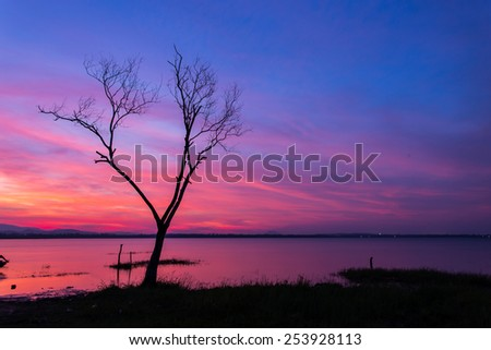 Dead trees on the lake in the early morning light.  - stock photo