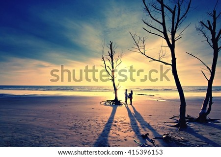 Dead trees on the sand with sunset light. - stock photo