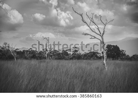 Dead trees Prairie Central,Monochrome. - stock photo