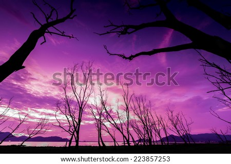 Dead Trees Silhouette - stock photo