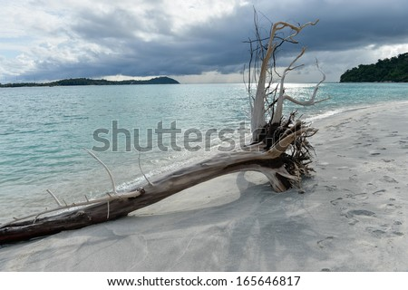 Dead tress at the shore of tropical beach, Thailand - stock photo
