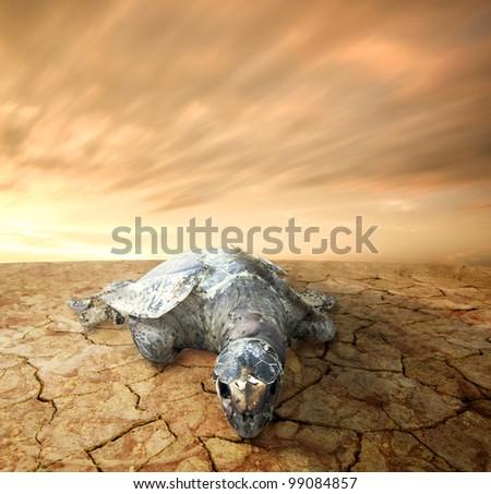dead turtle,sea pollution concept photo - stock photo