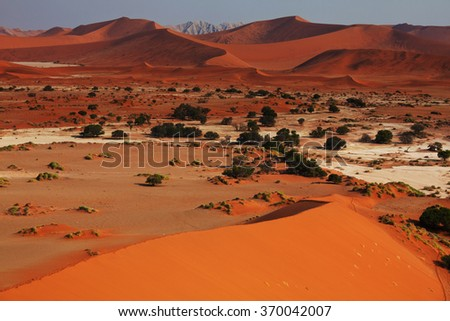 Dead Valley in Namib desert - stock photo