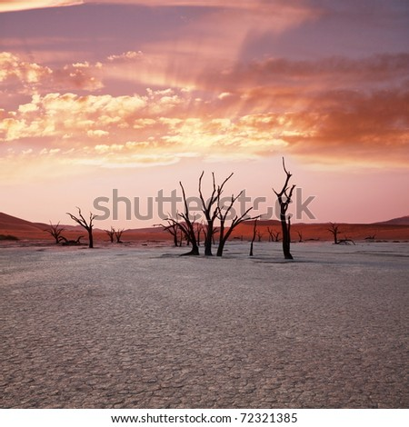 Dead valley in Namibia at dark - stock photo